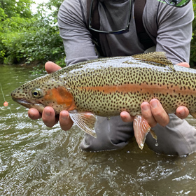 5 Things To Consider When Choosing Best Fly Line for Trout