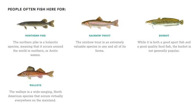 2-Fish-species640.jpg