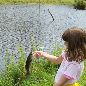 4 Benefits of Pond Fish Habitat
