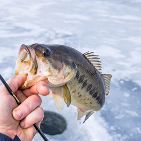How to Start Ice Fishing in 8 Easy Steps