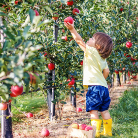 kid apple picking