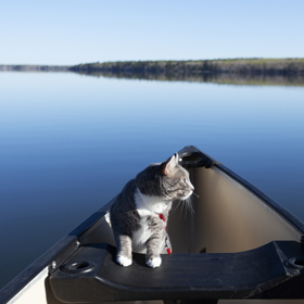 fishing with cats